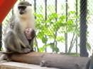 Зоопаркът се напълни с нови бебета