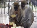 """Зоопарк Варна избира """"Двойка на годината"""""""