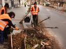 """Засаждат нови дървета в стари дънери на ул. """"Колони"""""""