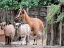 166 000 посетители е посрещнал зоопаркът във Варна