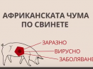 Информация от МЗХГ относно африканската чума по свинете